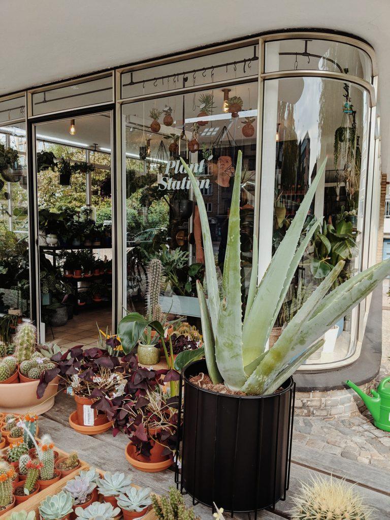 Pflanzen bei Winkel Van Sinkel